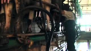 getlinkyoutube.com-EchoEco    تربية الأبقار بين التكاليف و المردودية
