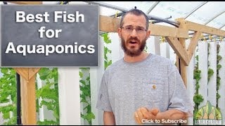 getlinkyoutube.com-Best Fish for Aquaponics