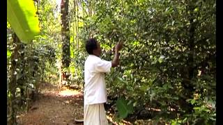 getlinkyoutube.com-സമ്മിശ്രകൃഷിയുടെ ഉസ്താദ്