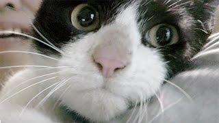 【猫・里親募集】保護猫ケンちゃん♡お風呂で乾かした後…抱っこして甘える!?【置き去りにされた猫ちゃん10】Cat Video - Feral cat rescue.