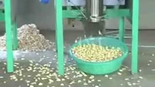 getlinkyoutube.com-Garlic peeler machine.flv