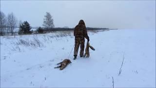 getlinkyoutube.com-Норная охота на лису с ягдтерьером.