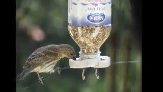 50 Bird Feeder Ideas