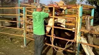 getlinkyoutube.com-la monta del siglo abel jineteando al toro el catrin
