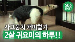 getlinkyoutube.com-TV동물농장(506회)_02