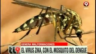 getlinkyoutube.com-Alerta por el mosquito zika