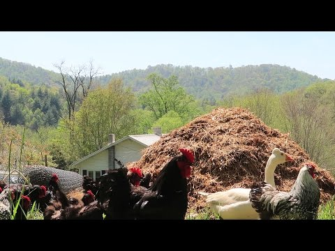 What Is Deep Bedding and Why We Use This Method!