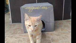 getlinkyoutube.com-como hacer una casita para gato