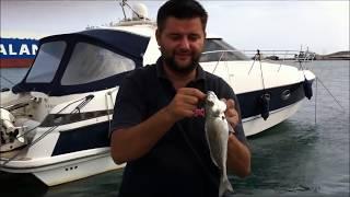 getlinkyoutube.com-εγγλεζικο ψαρεμα  για τσιπουρες.wmv