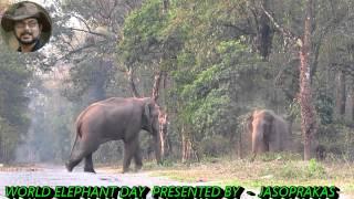 getlinkyoutube.com-Enjoy World Elephant Day 12 August 2015 With Jasoprakas.