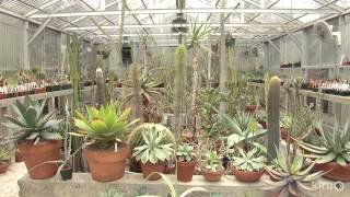 getlinkyoutube.com-Cactus and succulent garden and greenhouses | Bob Barth | Central Texas Gardener
