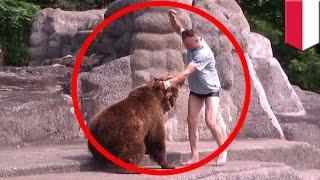 getlinkyoutube.com-Man v Bear: Polish man punches bear in the head at Warsaw zoo - TomoNews