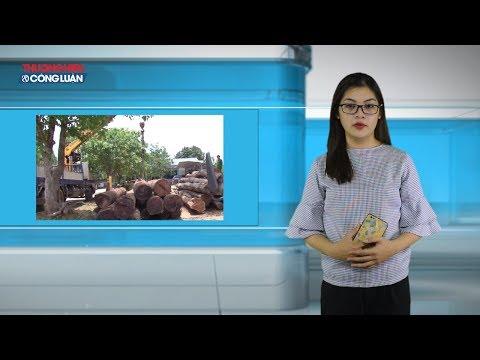 Khởi tố hạt trưởng hạt kiểm lâm tiếp tay trùm gỗ lậu