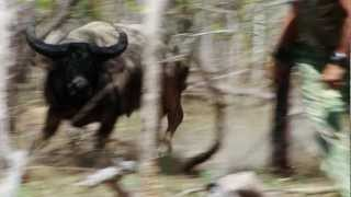 getlinkyoutube.com-The Australian Pursuit - Water Buffalo and the Way of the Spear (Preview)