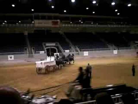 Percheron Congress - Mare Six Heat 1