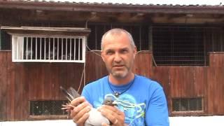 getlinkyoutube.com-FCPR Voluntari interviu dl Tudor Iulian porumbel zburat Moscova 1 august 2013