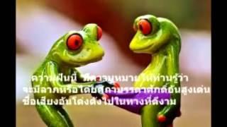 getlinkyoutube.com-ฝันเห็นกบ  ทํานายฝัน  (เลขเสี่ยงโชค)