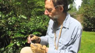 How to Collect Jumping Spiders (Salticidae)