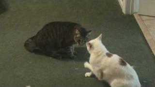 getlinkyoutube.com-The Best Cat Fight EVER On You Tube!  RE: EXTREME CAT FIGHT