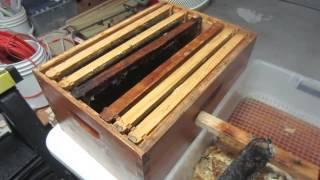 getlinkyoutube.com-Honey Extraction: 3 Uncapping Methods