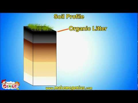 Soil Types & Soil Structure (Profile )