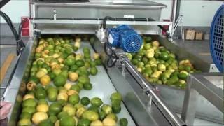 getlinkyoutube.com-Lemon oil and juice extraction .wmv