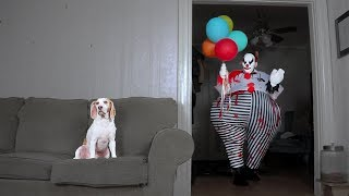 Dog Takes Down Scary Clown: Cute Dog Maymo