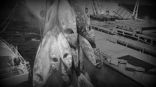 怖い話/マグロ漁船に乗せられる女性の実態 怪談 機械朗読!
