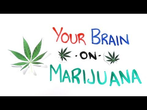 Your Brain on Drugs: Marijuana @AsapSCIENCE