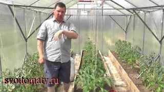 getlinkyoutube.com-Первый уход за томатами после высадки