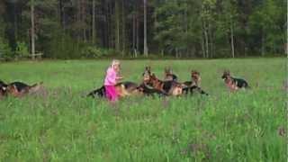 getlinkyoutube.com-Litle girl 5 years playing with 14 german shepherds.