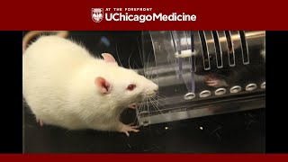 getlinkyoutube.com-Rats show kindness toward strangers, a new study shows