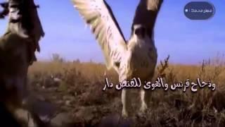 getlinkyoutube.com-شيلة عقب اربعين سهيل/ ناصر الطويل