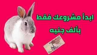 getlinkyoutube.com-ابدا مشروع الارانب بـالف جنيه بس | تربية الارانب | اجمل ارانب
