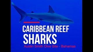 Bahamas Reef Sharks & Test New Camera