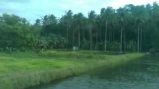 getlinkyoutube.com-Farm Lot for SALE , San Nicolas, Batangas