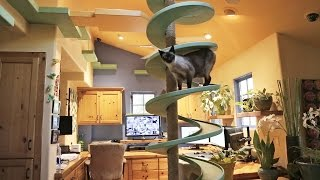 getlinkyoutube.com-Man Turns His House Into Indoor Cat Playland and Our Hearts Explode