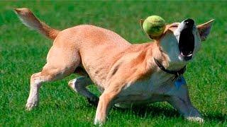 Dog Fails - Dog Fails Compilation 2016