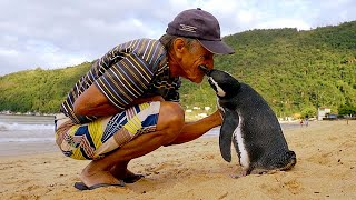 Jinjing The Penguin - Swims 5000 Miles Every Year To Visit The Man Who Saved Him width=