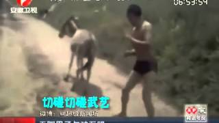man kick fighting with a donkey