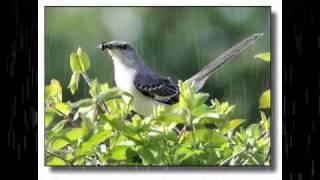 getlinkyoutube.com-ฝากใจไปกับนก