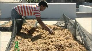 getlinkyoutube.com-Mushroom Cultivation (English)