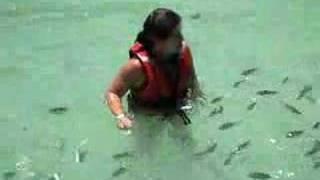 getlinkyoutube.com-Baby shark attack