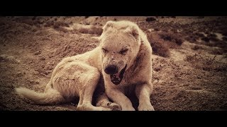 Kontra K - Wölfe