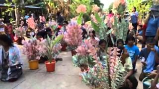 getlinkyoutube.com-ต้นดอกเงินผ้าป่า