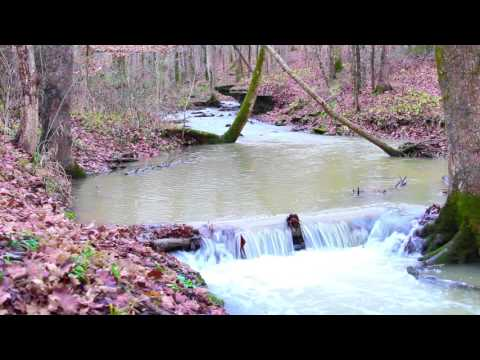 Relaxing Nature Music ~ Nature Sounds ~ Fall Timber Forest Falls