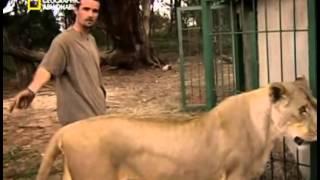 getlinkyoutube.com-فيلم ثائقي مرعب , مخيف عن الاسود و الحيوانات الاخري _ رجل وسط الوحوش . رععب