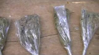 getlinkyoutube.com-Jamaica 2012 Buying Buds
