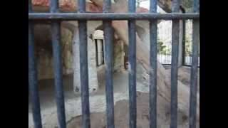 getlinkyoutube.com-kamatibaug zoo movie.