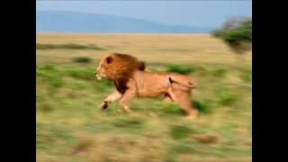 getlinkyoutube.com-Top 10 animaux les plus rapides